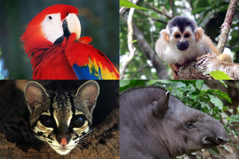 Artenschutz Kombi: Ara, Totenkopfäffchen, Ozelot, Tapir
